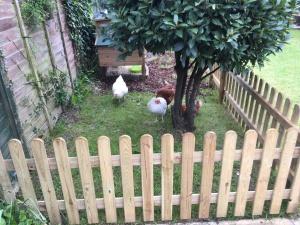 chicken run fence diy keeping chickens