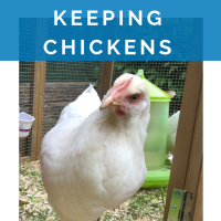 The dos and don'ts of keeping backyard chickens