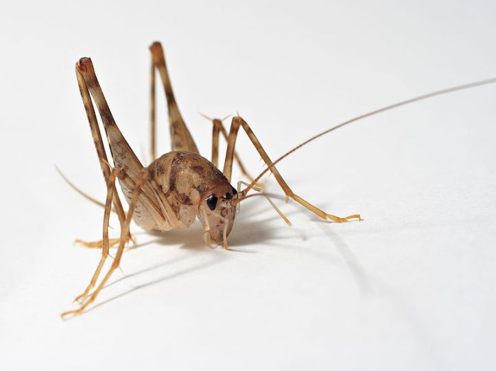 8 bugs you need to protect your home and wood creations from.jpg